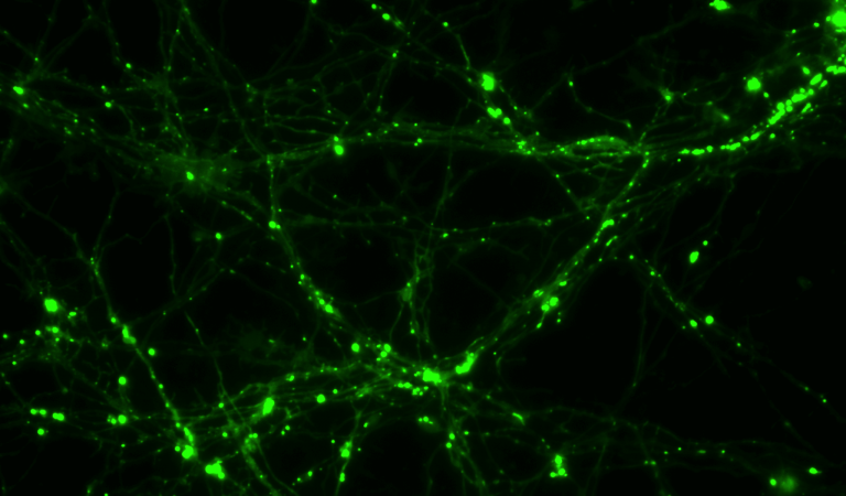 VAHEAT - neurons
