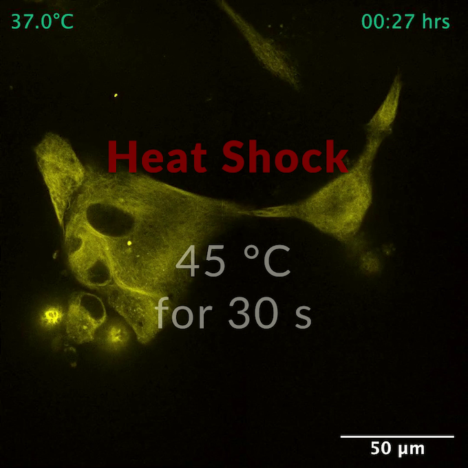VAHEAT - live cells heat shock